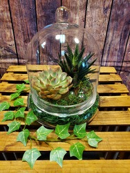 Living Succulents in a Glass Cloche from Amy's Flowers and Gifts in Sparks, NV