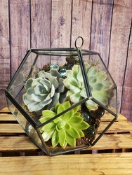 Live Succulents in Octagon from Amy's Flowers and Gifts in Sparks, NV