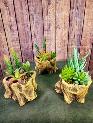 Faux Succulents in Resin Stump from Amy's Flowers and Gifts in Sparks, NV