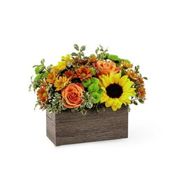 Happy Harvest Garden from Amy's Flowers and Gifts in Sparks, NV